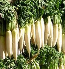 Benefits of Radish (Muli)