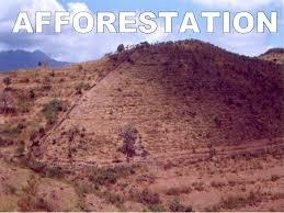 conclusion of afforestation
